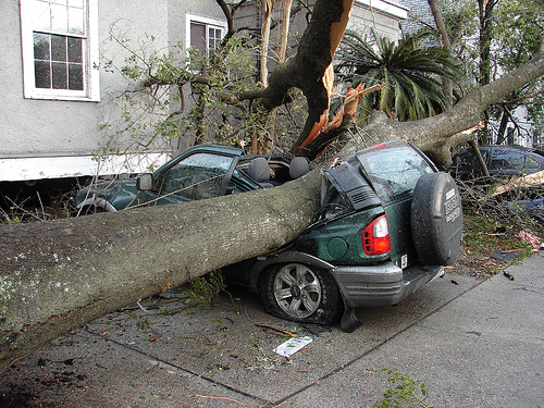 tree on car in hurricane