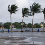 hurricane winds blowing palm trees on a beach